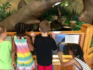 Children Looking at an Animal