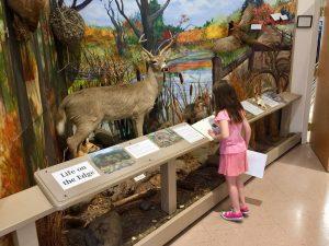 Girl Looking Towards a Deer